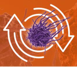 macrophage 1