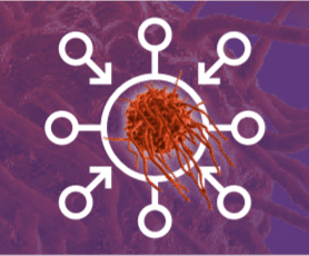macrophage 2