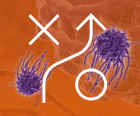 macrophage 3